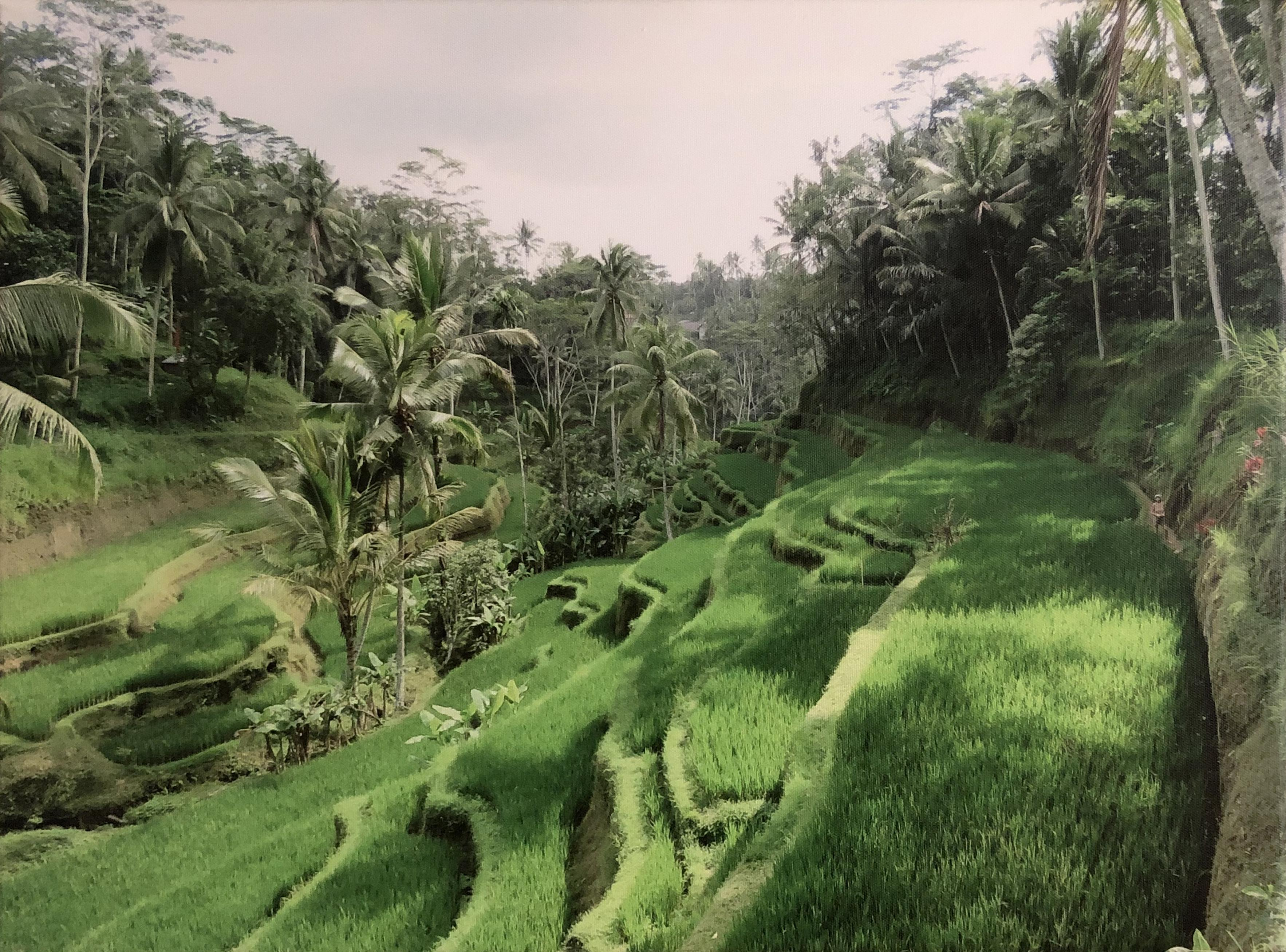 Sloping green paddy fields, Bali
